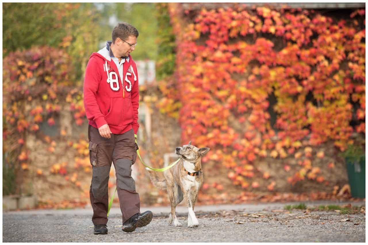 Hund zieht an der Leine - Hundetrainer Dresden