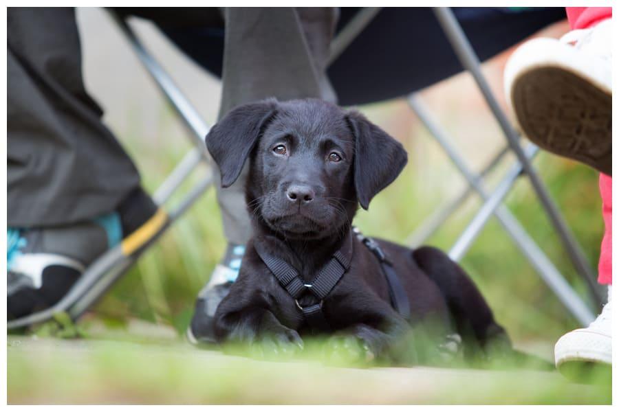 Eine passende Hundeschule finden
