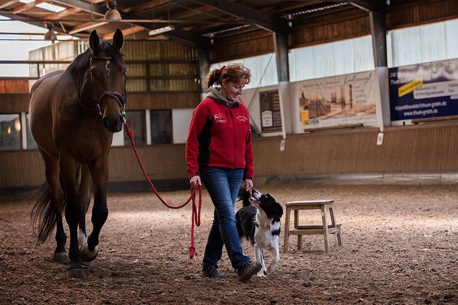 Training Reitbegleithund - Hundetrainer Kai Hartmann