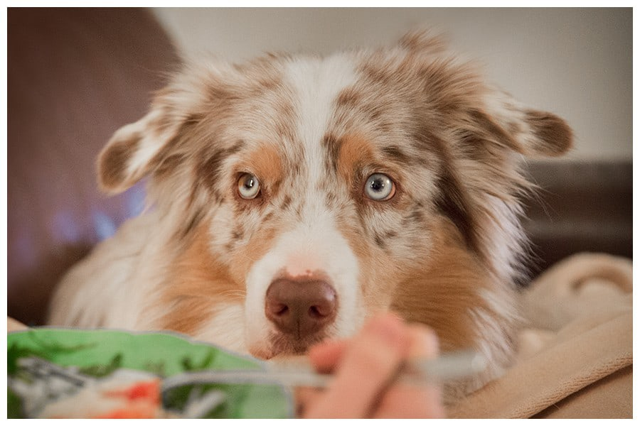 Vermenschlichung Hundetrainer Dresden Kai Hartmann