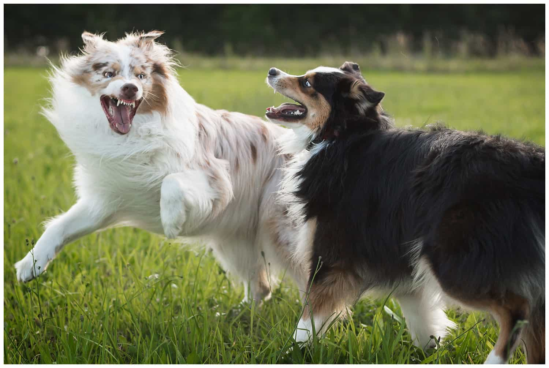 Hundetrainer Kai Hartmann Grenzen sind gut