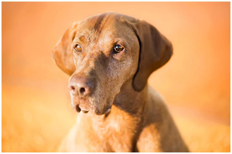 Wer ist mein Hund? Hundetrainer Dresden Kai Hartmann