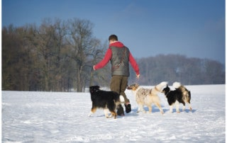 Kai Hartmann Hundetrainer Dresden