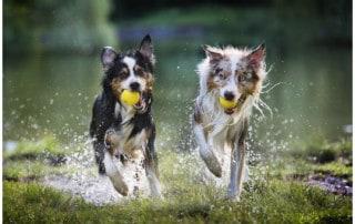 Hundeerziehung Kai Hartmann Hundetrainer Dresden