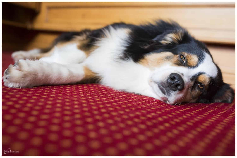 Hund allein zu Haus - Training mit Kai Hartmann Hundetrainer Kai Hartmann