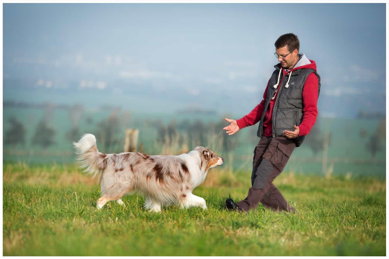 Hundetrainer Dresden Kai Hartmann Erziehung Ausbildung
