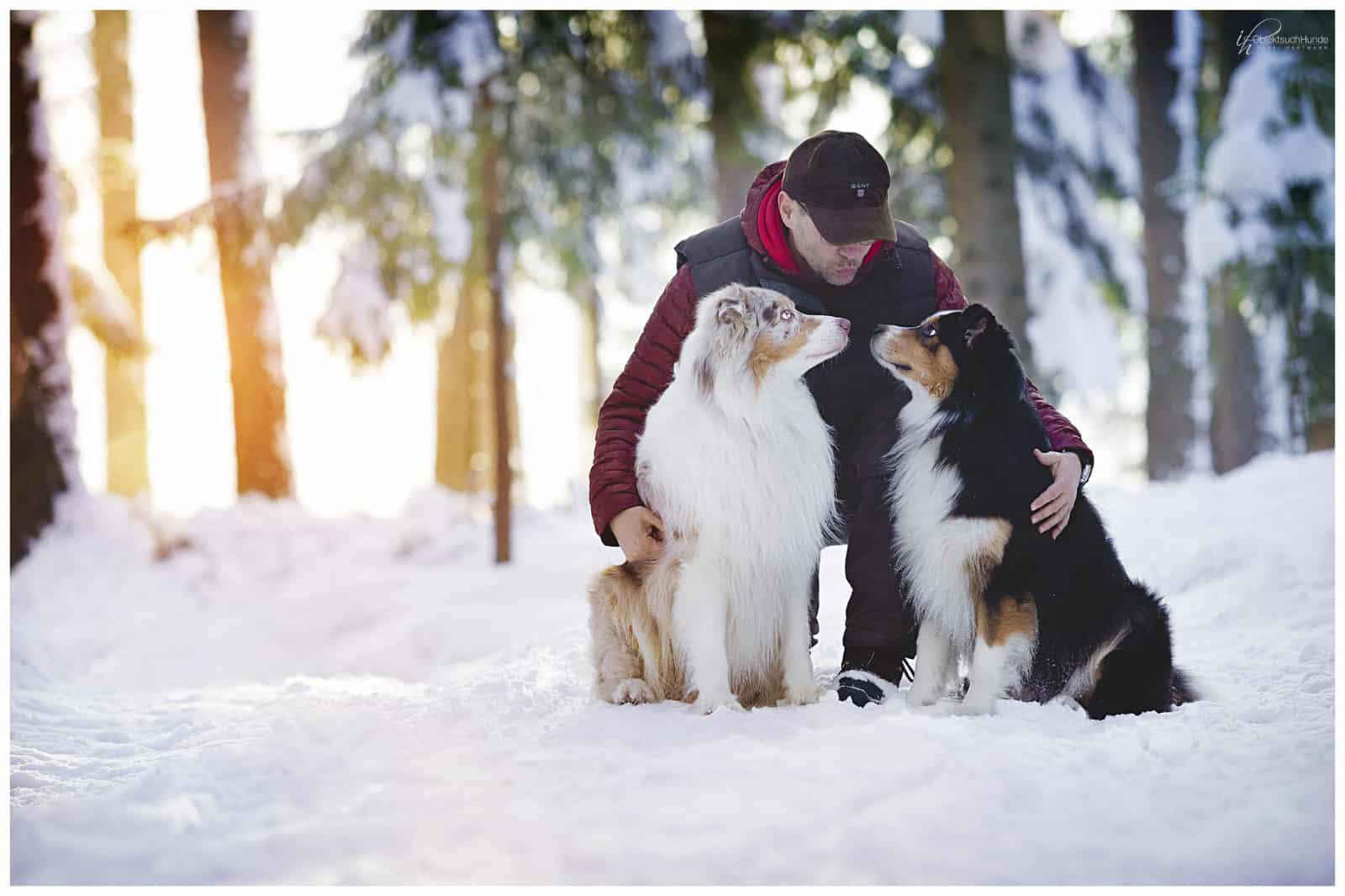 Das Jahr des Hundes 2018 - Kai Hartmann - Hundeschule Dresden - Hundetrainer