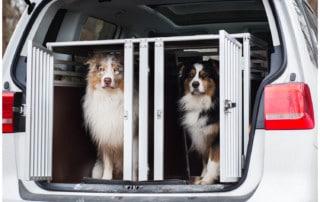 Anfang der Hundeerziehung Hundeschule Hundetrainer Kai Hartmann Dresden