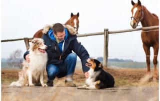 Erziehungshilfen Hundetrainer Hundeschule Kai Hartmann Dresden