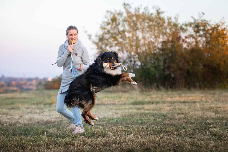 AHA Effekt Hundeschule Hundetrainer Kai Hartmann Dresden