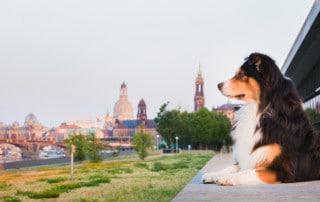 Hundeschule Hundetrainer Kai Hartmann Dresden