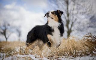 Problemhund richtig erziehen
