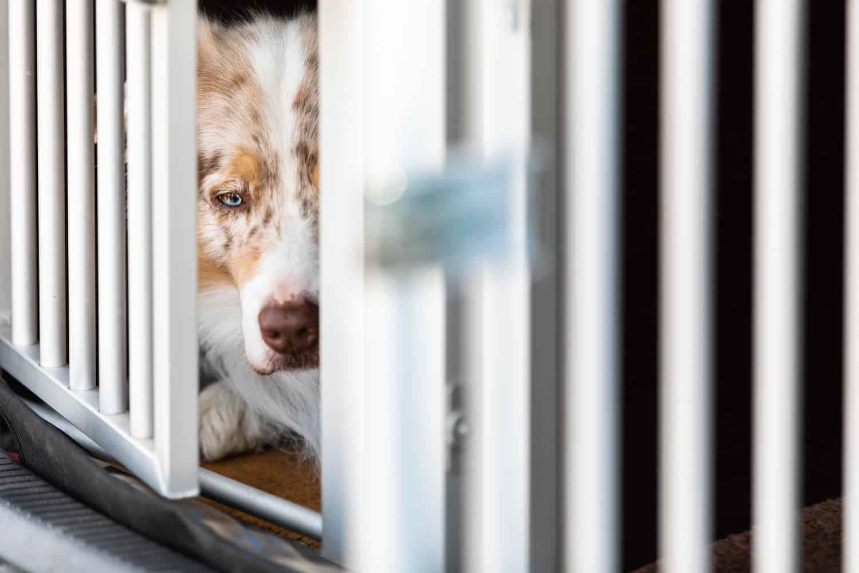 Wenn Hundeerziehung nicht gelingt Hundeschule Hundetrainer Dresden Kai Hartmann