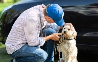 So Loben Sie ihren Hund richtig