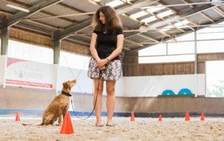 Leinenführigkeit von Hunden