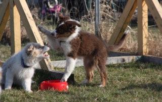 Welpenerziehung Hundeschule Hundetrainer Kai Hartmann