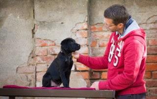 Hundeerziehung mit Hausleine - Kai Hartmann