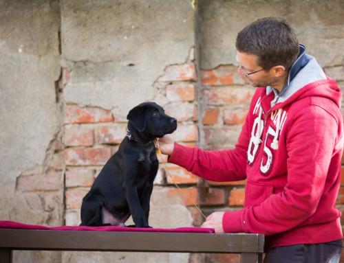 Hundeerziehung mit der Hausleine