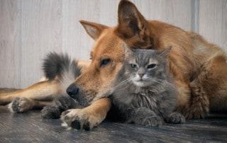 Wenn der Hund die Katze jagt