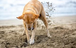 Einfach mal Hund sein