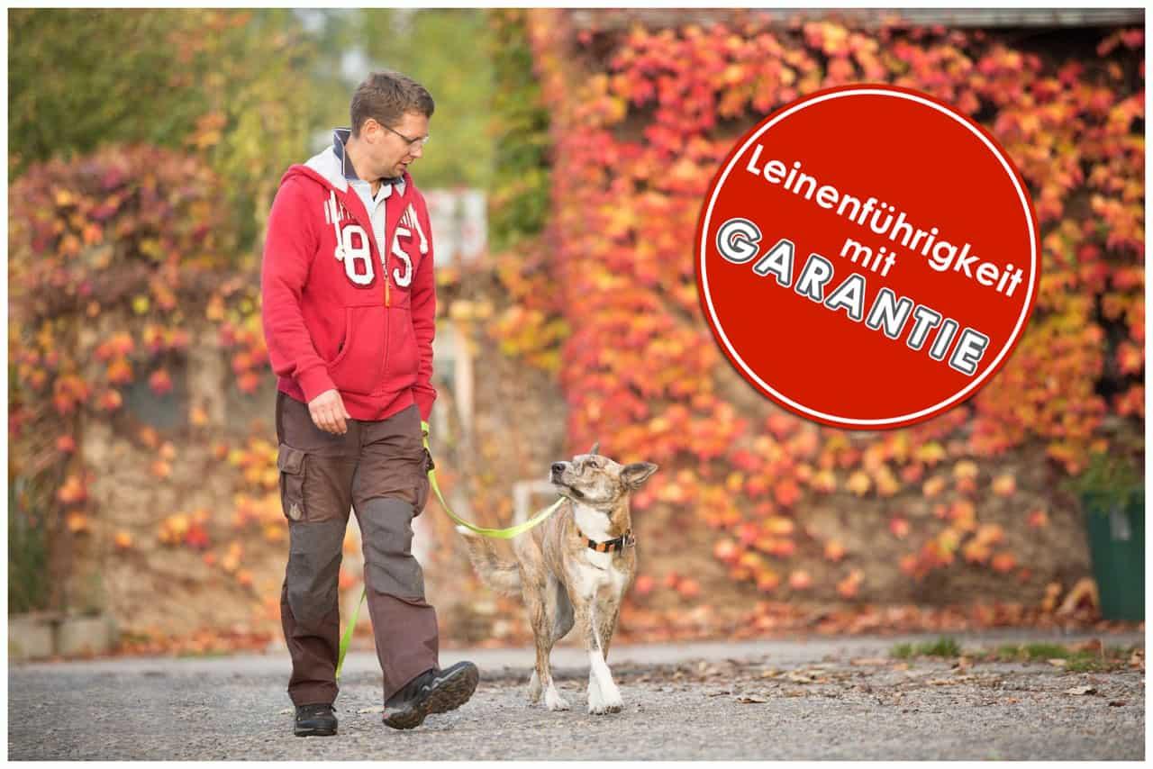Hund-zieht-an-der-Leine-Hundeschule-Dresden