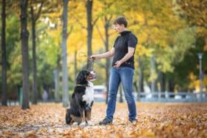 Wie Hundeerziehung gelingt Hundetrainer Hundeschule Dresden Kai Nancy