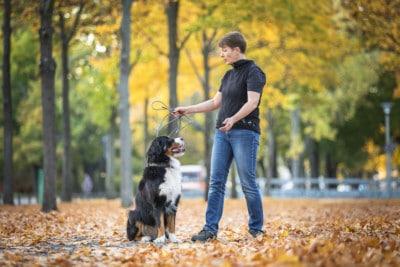 Wie Hundeerziehung gelingt-Hundetrainer-Hundeschule Dresden Kai Nancy