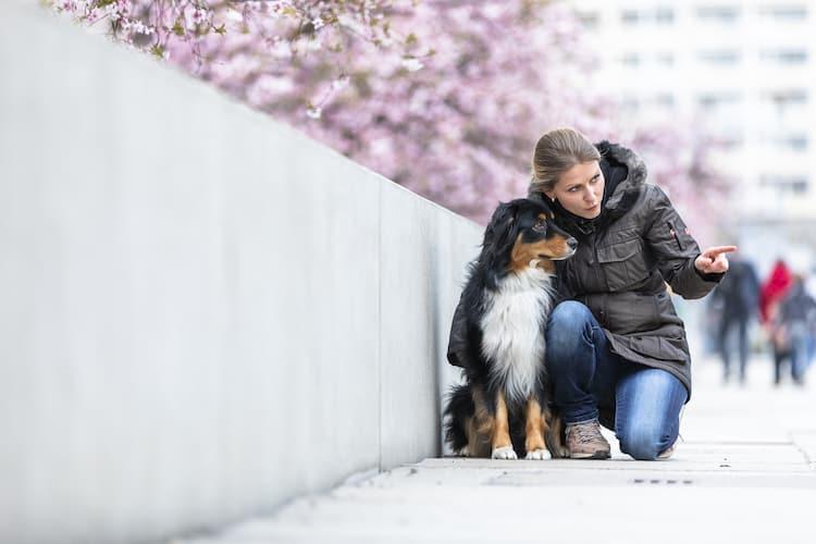 Wie erzieht man einen Hund? Hundetrainer Hundeschule Dresden Kai Hartmann nancy Wendler