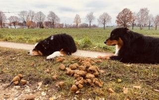 Hund frißt Scheiße alles vom Boden Unrat Kai Hartmann Hundetrainer Dresden Hundeschule Dresden