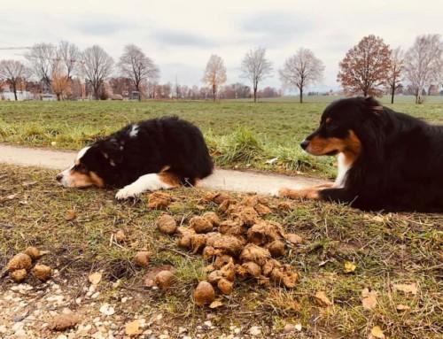Dein Hund frisst alles vom Boden