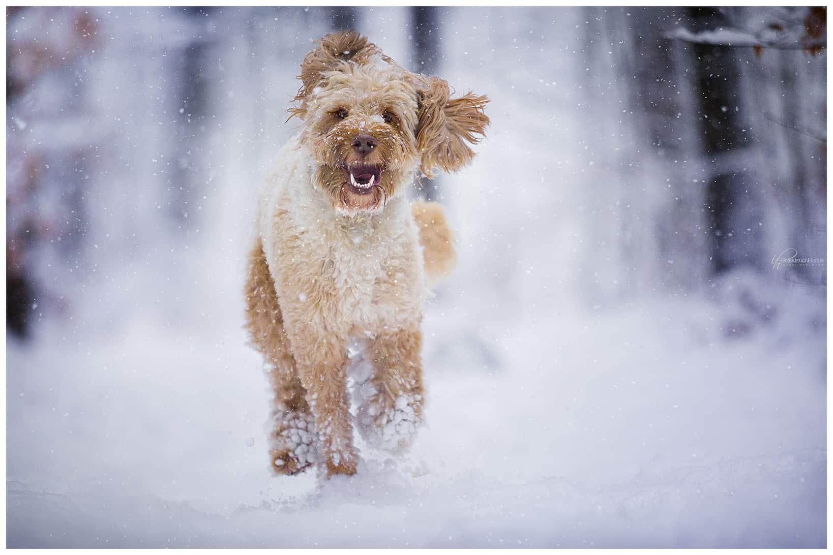 Adventsrunde mit Hund Hundetrainer Hundeschule Dresden Kai Hartmann