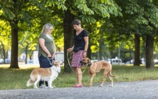 Hundebegegnung Hundekontakt an der Leine Kai Hartmann Hundetrainer Dresden