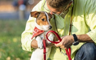 Hundetrainer Hundeschule Dresden Kai Hartmann Hundeerziehung Hundetraining Hundeleine