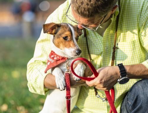 Warum dein Hundetraining nicht funktioniert…
