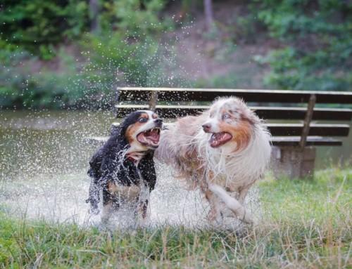 Die große Freiheit für deinen Hund