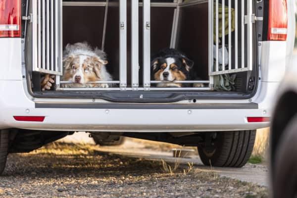 Gewöhnung an die Hundebox Hundetrainer Dresden Kai Hartmann