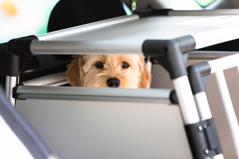 Hundebox Gewöhnung Erziehungshilfe