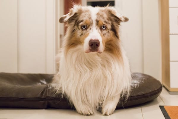 Hundeschule Dresden Ressorcenverteidigung Hund