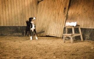 Hundeschule Dresden Ressourcen Hund