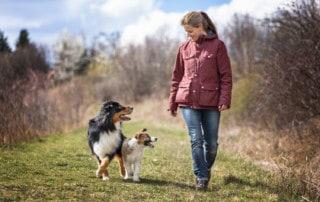 Ausrutscher in der Hundeerziehung
