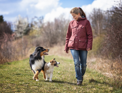 Wie deine Hundeerziehung erfolgreich wird