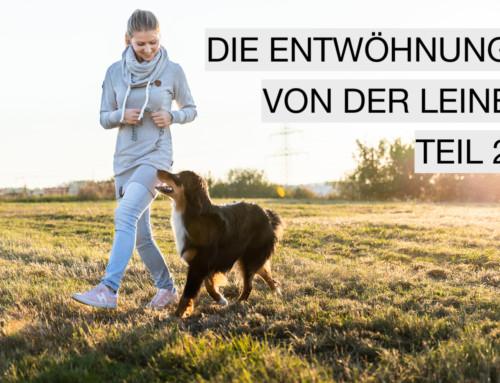 Hund ohne Leine führen – Teil 2