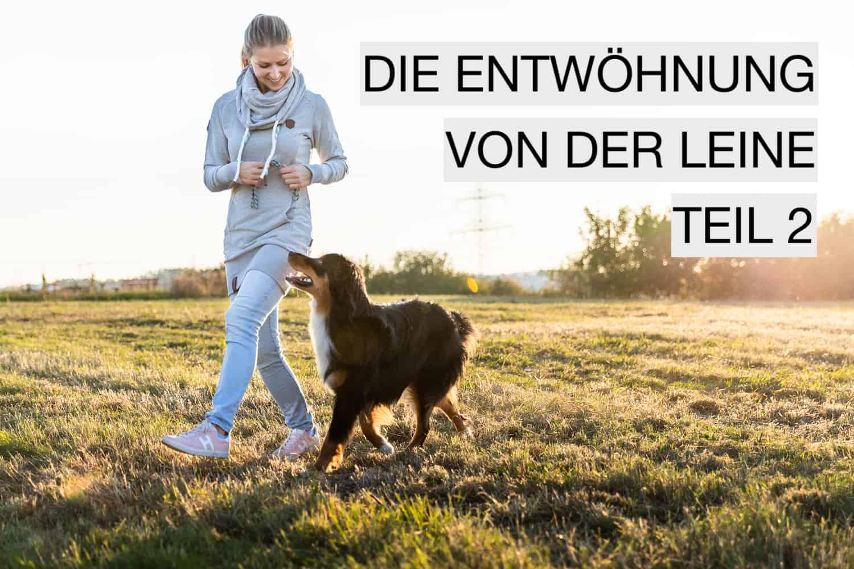 5er-Basis Leinenführigkeit Hundeschule Welpenschule Dresden