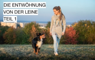 5er-Basis gehen ohne Leine Leinenführigkeit Hundeschule Hundetrainer Dresden
