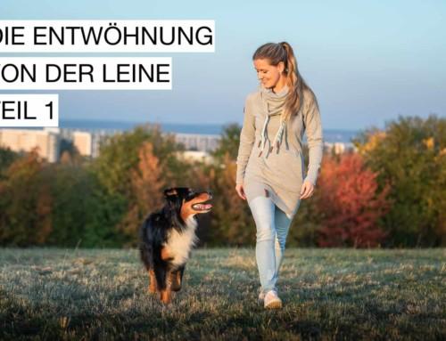 Hund ohne Leine führen – Teil 1