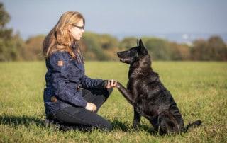 Das Feine Führen nach der 5er-Basis Hundetrainer Dresden