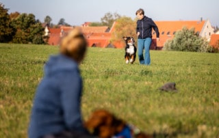 Veränderung Hundetrainer Dresden Hundeschule Kai Hartmann