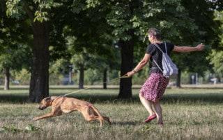 Leinenführigkeit der beste Weg Hundeschule Hundetrainer Dresden Kai Hartmann